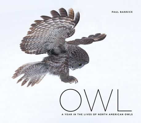 Owl Cover