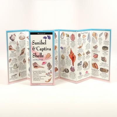 Sanibel & Captiva Shells and Beach Life Cover Image