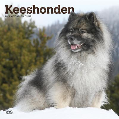 Keeshonden 2020 Square Cover Image