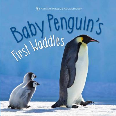 Baby Penguin's First Waddles (First Discoveries) Cover Image