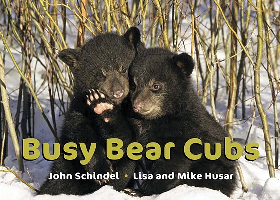 Busy Bear Cubs Cover