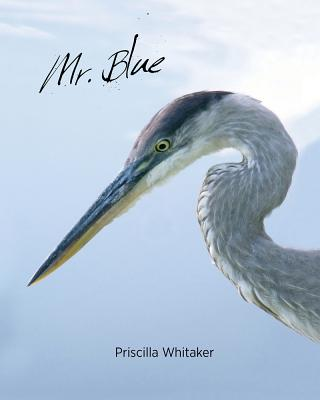 Cover for Mr. Blue