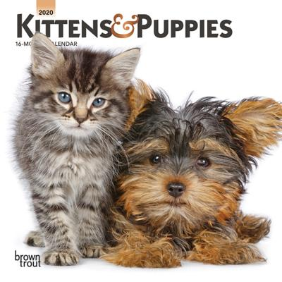 Kittens & Puppies 2020 Mini 7x7 Cover Image
