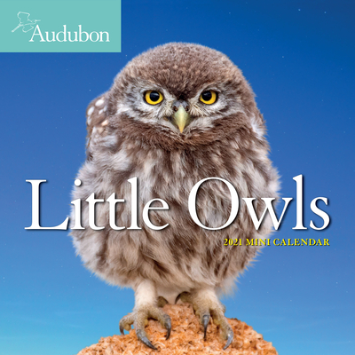 Audubon Little Owls Mini Wall Calendar 2021 Cover Image