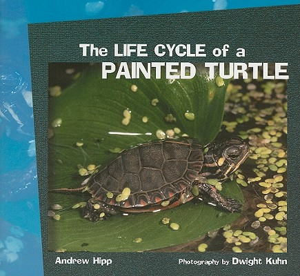 Cover for The Life Cycle of a Painted Turtle (Focus on Science)