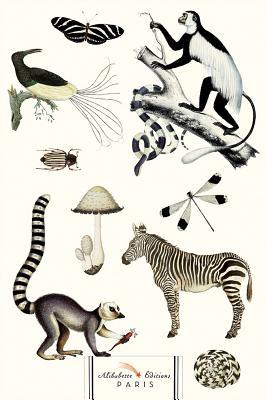 Noir Et Blanc (Black & White Animals): Nature Is the Designer! Cover Image