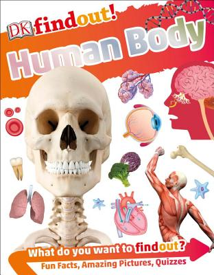 DKfindout! Human Body (DK findout!) Cover Image