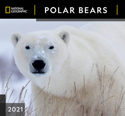 Cal 2021- National Geographic Polar Bears Wall Cover Image