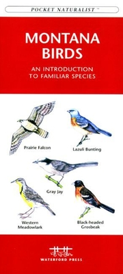 Weather: A Folding Pocket Guide to to Clouds, Storms and Weather Patterns (Pocket Naturalist Guide) Cover Image