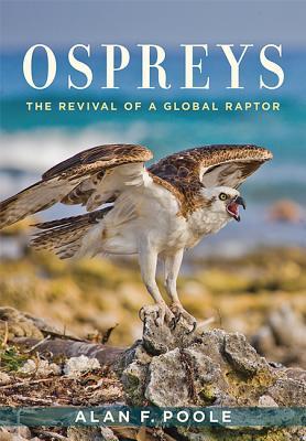 Ospreys: The Revival of a Global Raptor Cover Image