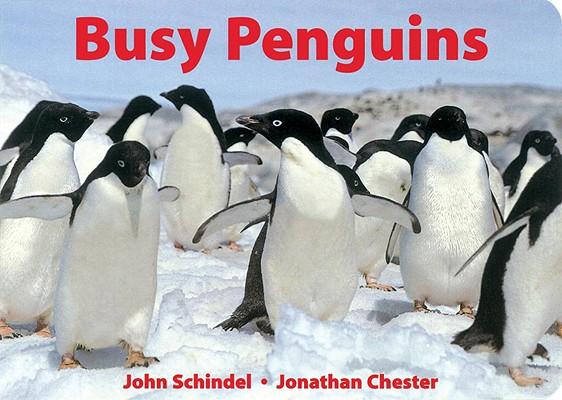 Busy Penguins (A Busy Book) Cover Image