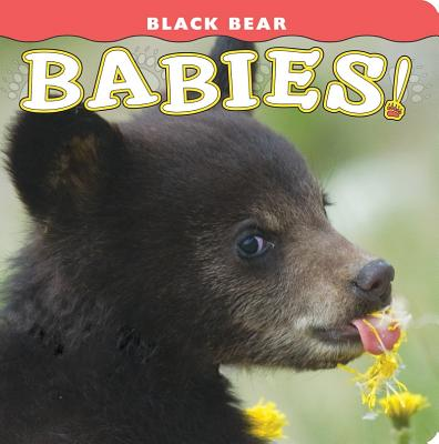 Black Bear Babies! (Babies! (Farcountry Press)) Cover Image