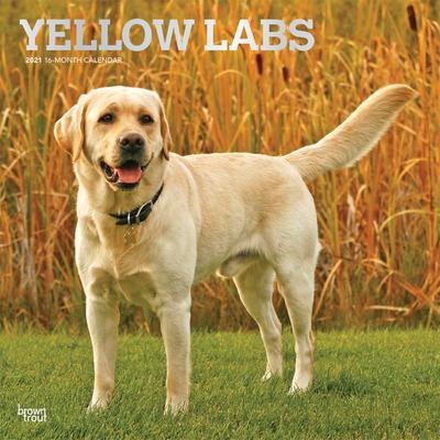 Labrador Retrievers, Yellow 2021 Square Foil Cover Image