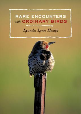 Rare Encounters with Ordinary Birds Cover Image