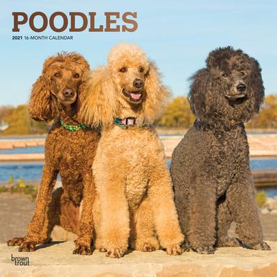 Poodles 2021 Square Foil Cover Image