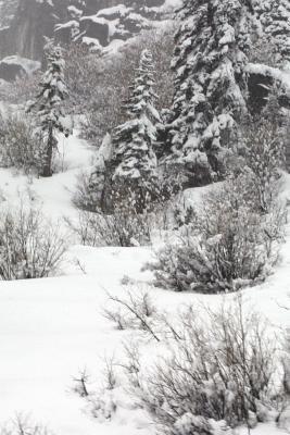 Arctic Foxes: A Concise Compendium Cover Image