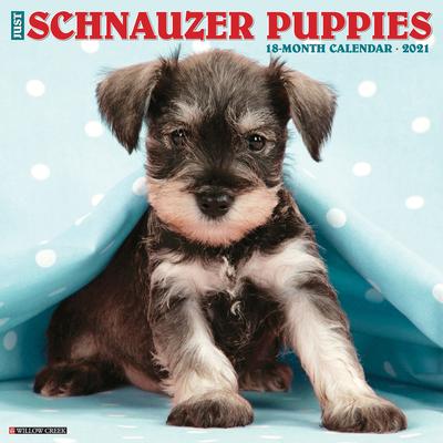 dog breed calendar Free Shipping 2021 Wall Calendar Just Boston Terriers