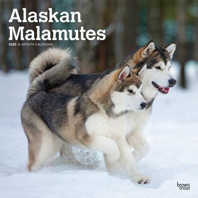 Alaskan Malamutes 2020 Square Cover Image