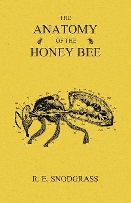 The Anatomy of the Honey Bee Cover Image