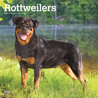 Rottweilers 2021 Square Cover Image
