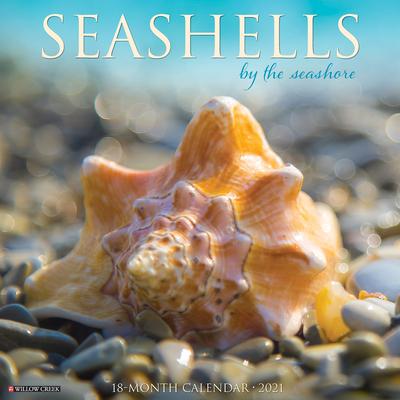 Seashells 2021 Wall Calendar Cover Image