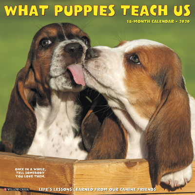 What Puppies Teach Us 2020 Wall Calendar Cover Image
