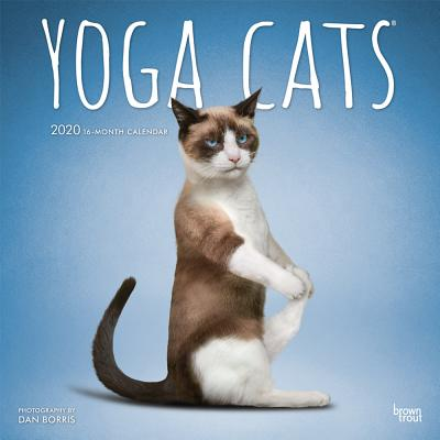 Yoga Cats 2020 Square Cover Image