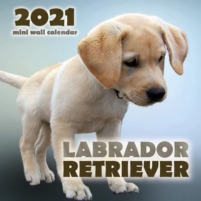Labrador Retriever 2021 Mini Wall Calendar Cover Image