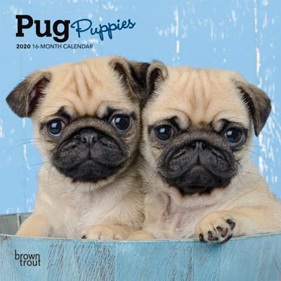Pug Puppies 2020 Mini 7x7 Cover Image