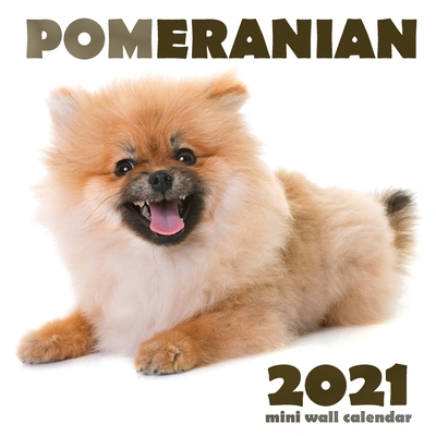 Pomeranian 2021 Mini Wall Calendar Cover Image