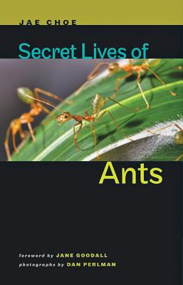 Secret Lives of Ants Cover Image