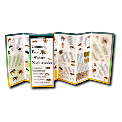 Common Bees of Western North America Cover Image