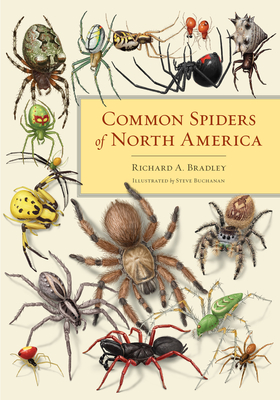 Common Spiders of North America Cover Image