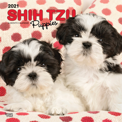 Shih Tzu Puppies 2021 Square Cover Image
