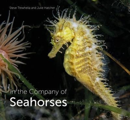 In the Company of Seahorses Cover Image