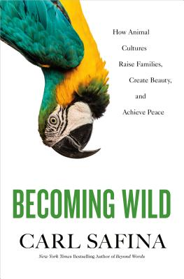 Becoming Wild: How Animal Cultures Raise Families, Create Beauty, and Achieve Peace Cover Image