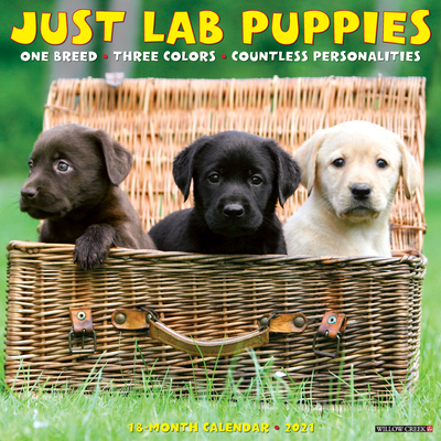 Just Lab Puppies 2021 Wall Calendar (Dog Breed Calendar) Cover Image