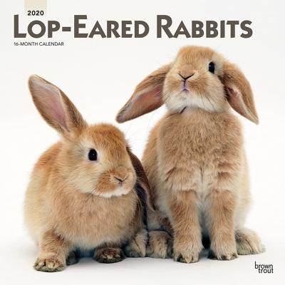 Lop Eared Rabbits 2020 Square Cover Image