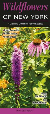Wildflowers of New York: A Guide to Common Native Species Cover Image