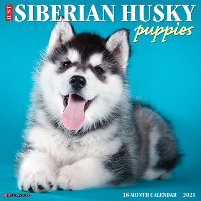 Just Siberian Husky Puppies 2021 Wall Calendar (Dog Breed Calendar) Cover Image