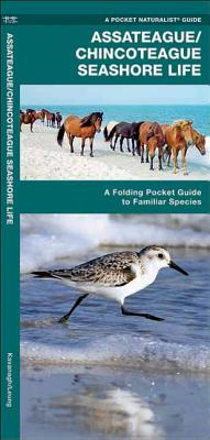 Assateague/Chincoteague Seashore Life: An Introduction to Familiar Species Cover Image