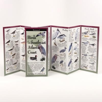 Birds of the Southeast Atlantic Coast Cover Image