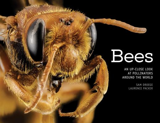Bees: An Up-Close Look at Pollinators Around the World Cover Image