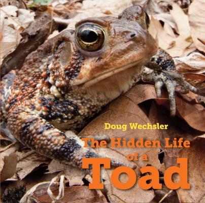 Cover for The Hidden Life of a Toad