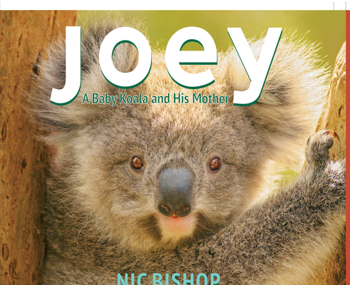 Joey: Baby Koala and His Mother Cover Image