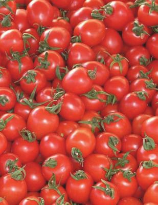 Tomatoes Notebook large Size 8.5 x 11 Ruled 150 Pages Cover Image