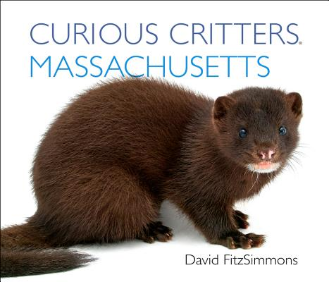 Curious Critters Massachusetts (Curious Critters Board Books) Cover Image