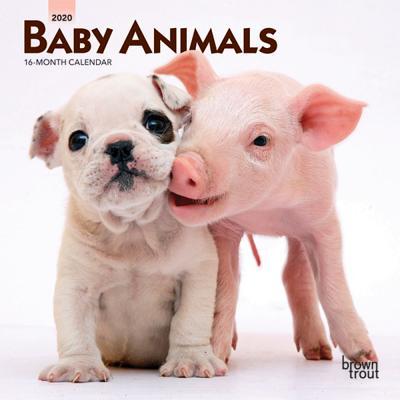 Baby Animals 2020 Mini 7x7 Cover Image