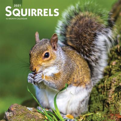 Squirrels 2021 Square Cover Image