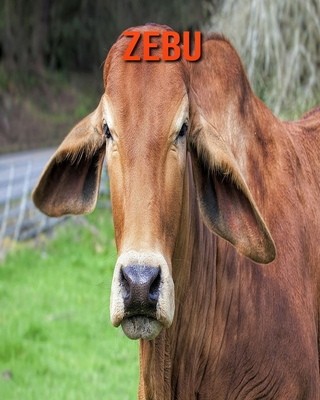 Zebu: Children's Books --- Amazing Pictures and Facts About Zebu Cover Image